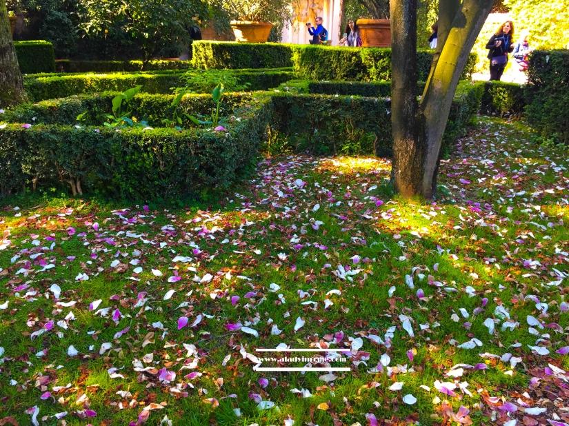 giardino-5.jpg
